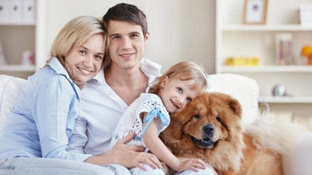 Wills & Trusts dog-young-family Direct Wills Ham